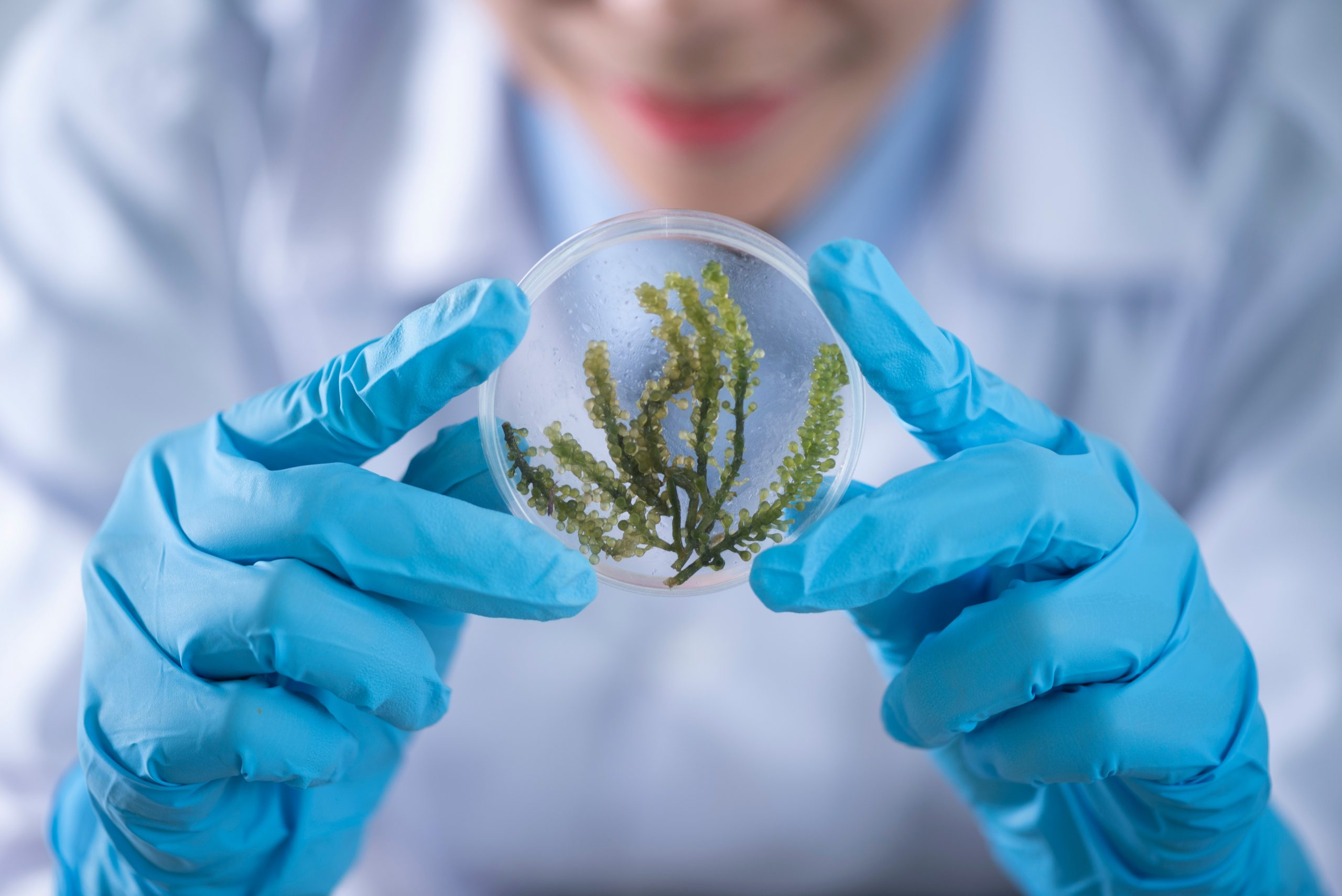 Cannabis Research and Development